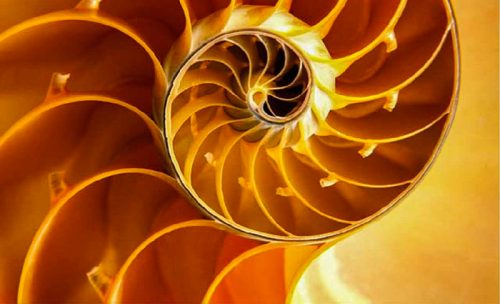 The-Deepening_spiral-shell_700x425